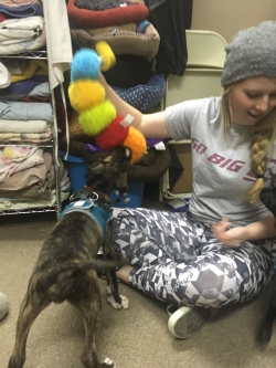 EKU student works with puppies at the Humane Society